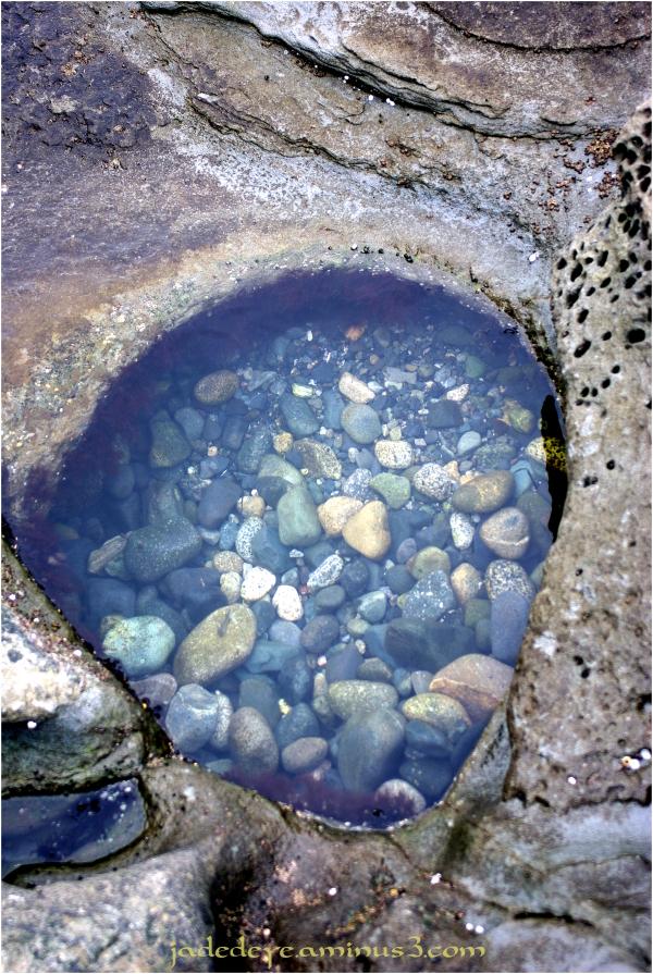 Tidal Pool #1