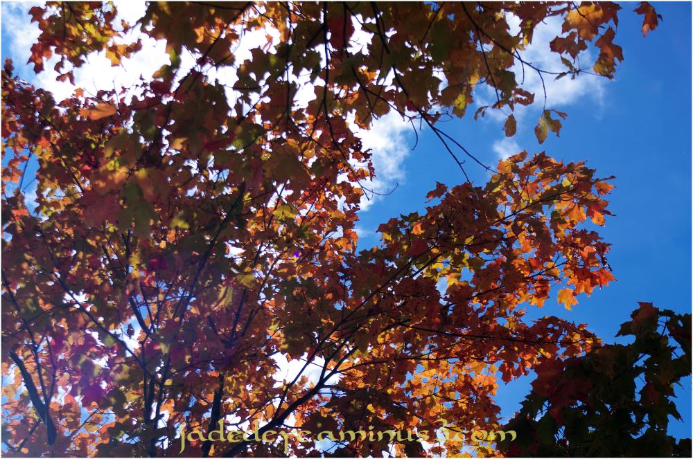 Autumn Colours #4