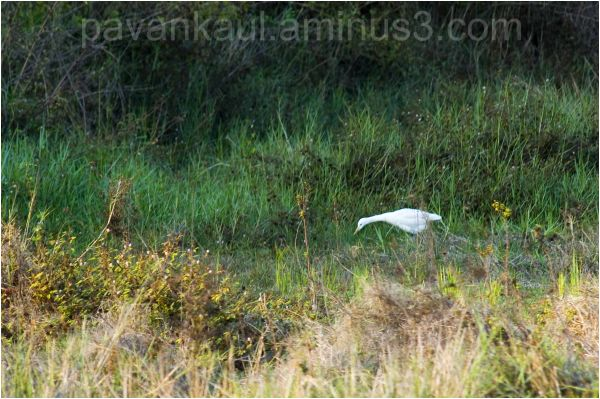 Heron in fields