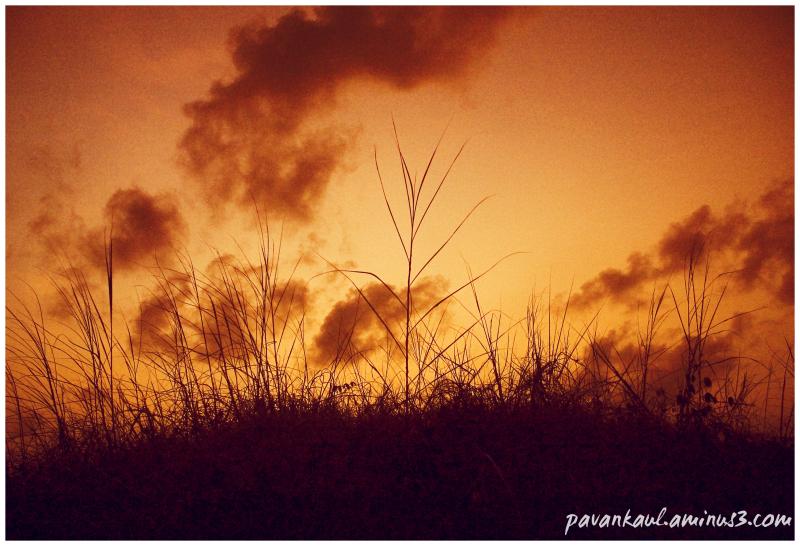 Shrubs at sunset