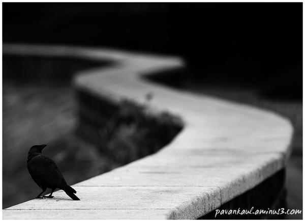 crow on wall