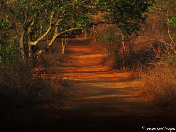 deep forest path at dusk