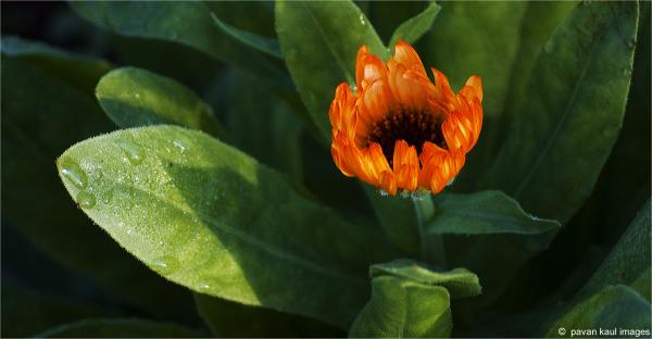 budding flower in the winter morning light