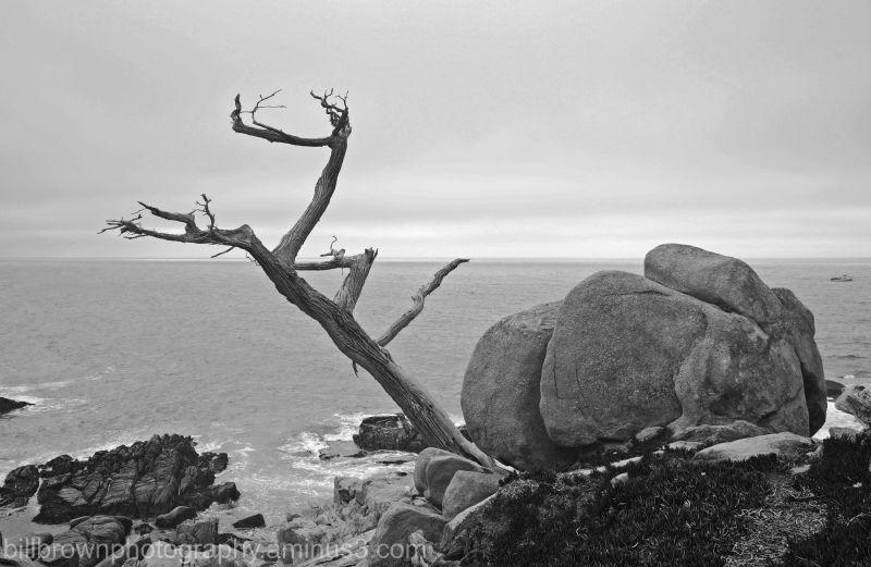 Dead Cypress & Rocks
