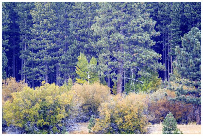 Fall Color, South Lake Tahoe