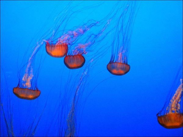 Jellyfish dancing