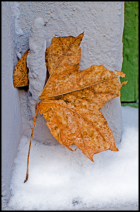A dead leaf in the middle of winter