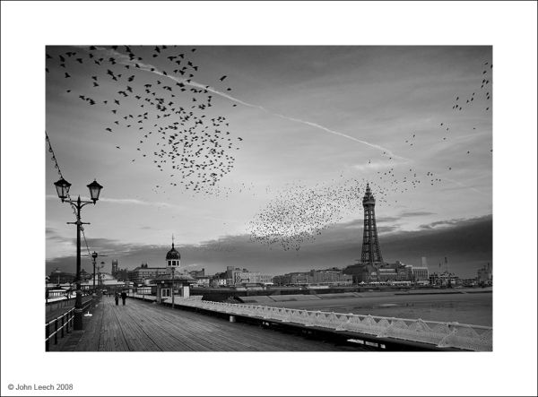 blackpool starlings