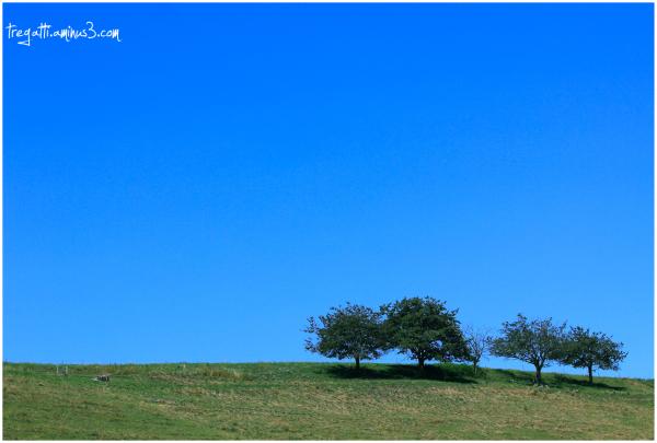 farm, trees, sky