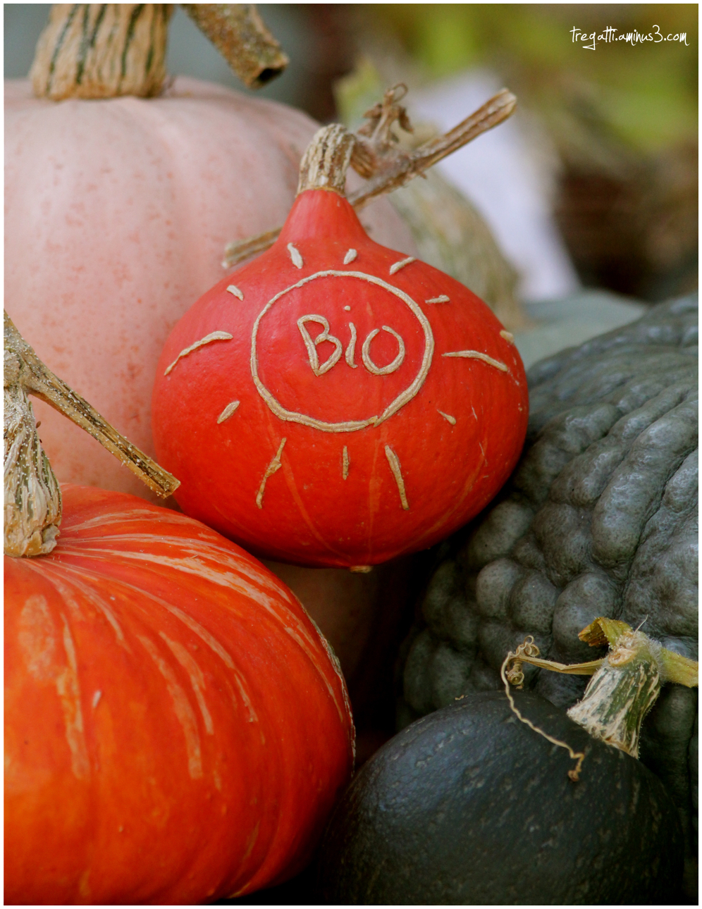 organic, potiron, pumpkins, autumn, bio
