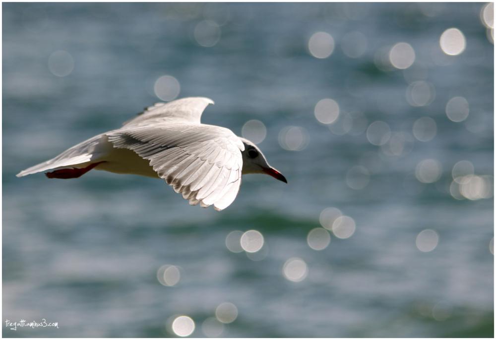 gull, wing, lake