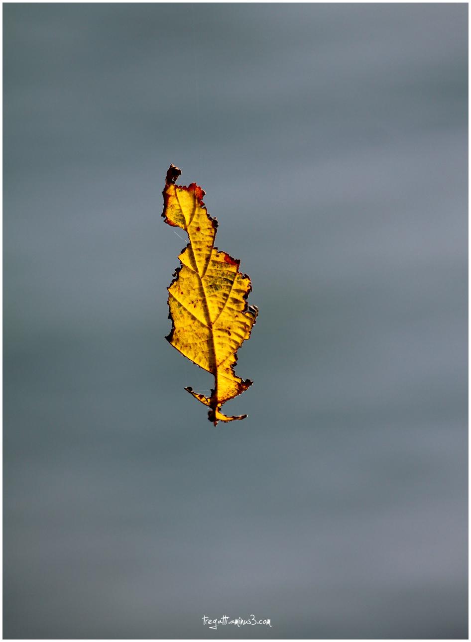 autumn, leaf