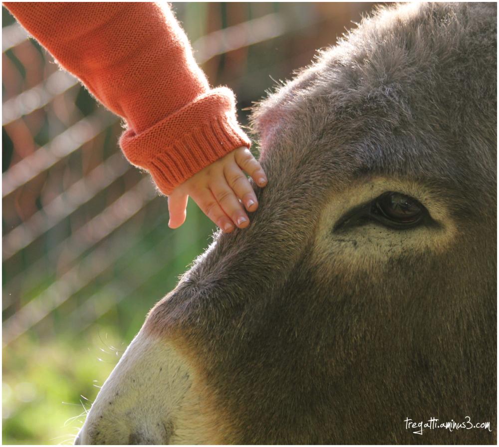 hand, donkey