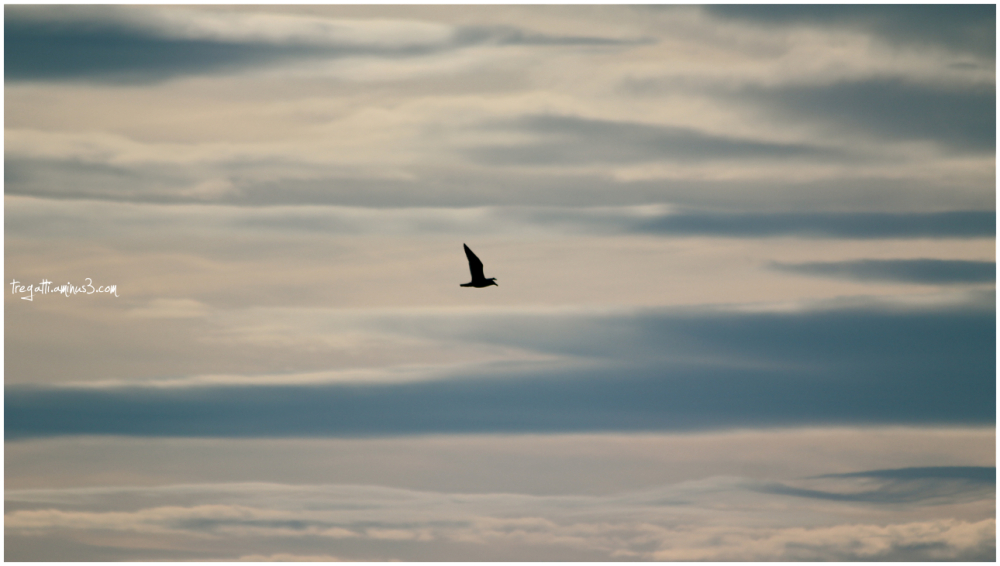 gull, sky, clouds