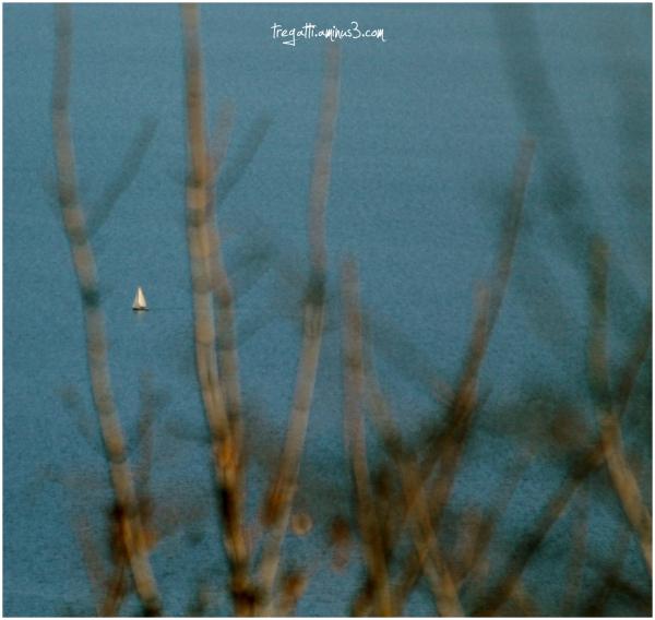 sailboat, lake, winter, trees