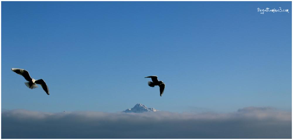 gulls, mountain