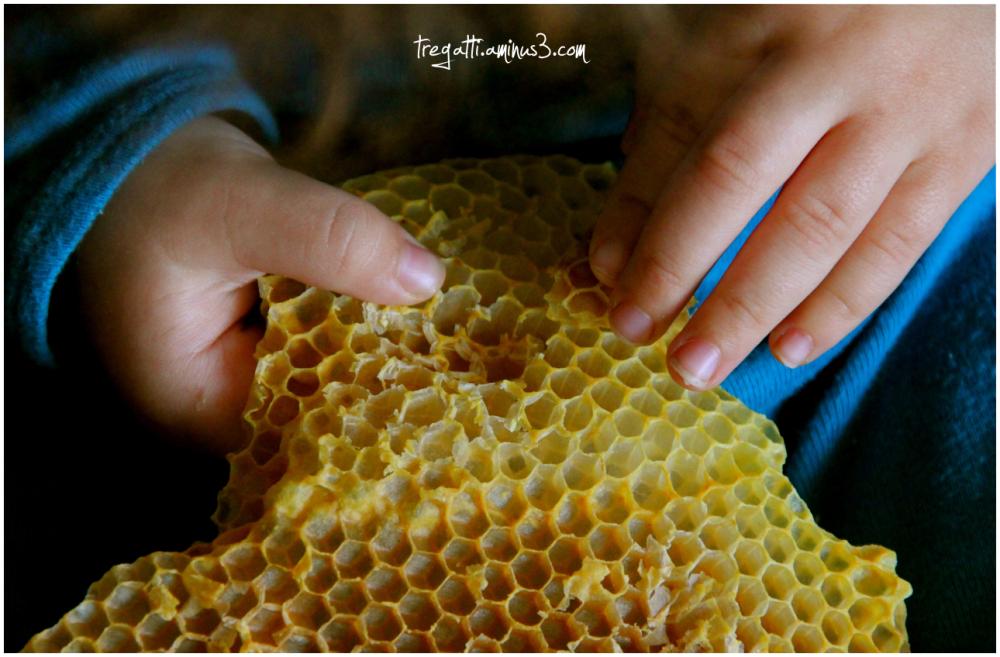 hand, beeswax, honeycomb