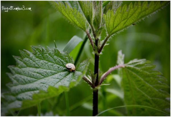 leaf, snail, rain
