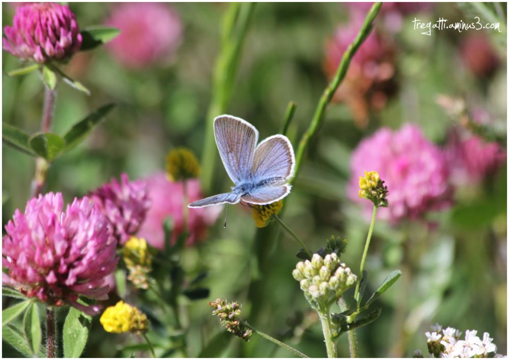 butterfly, wildflowers
