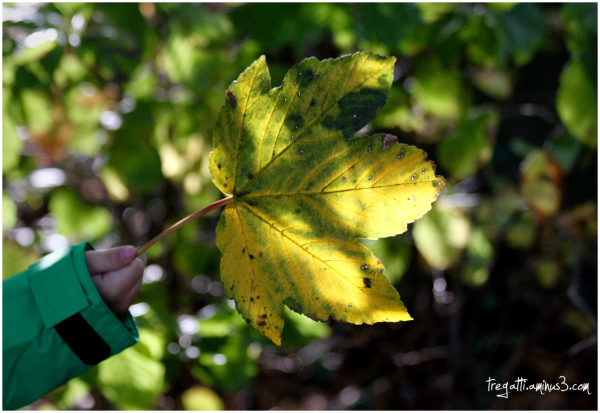 hand. leaf, autumn