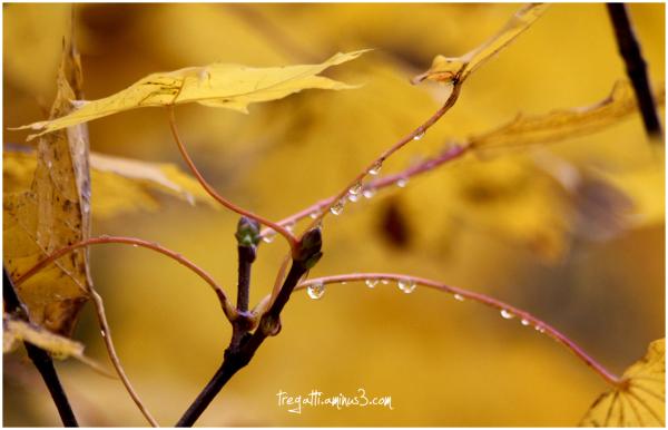 autumn, leaves, rain