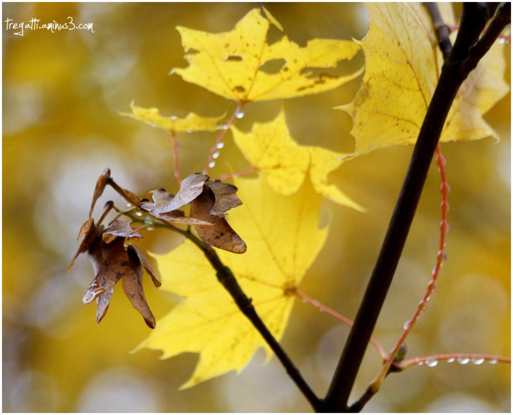 autumn, seeds, tree, leaves