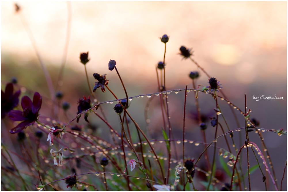 flowers, autumn, rain