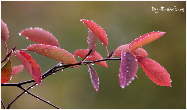 autumn, leaves, droplets