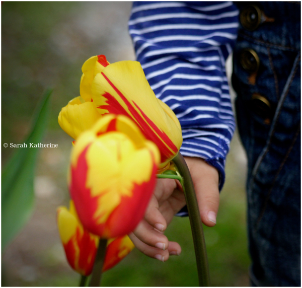 spring, hand, tulips