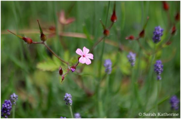wirldflowers