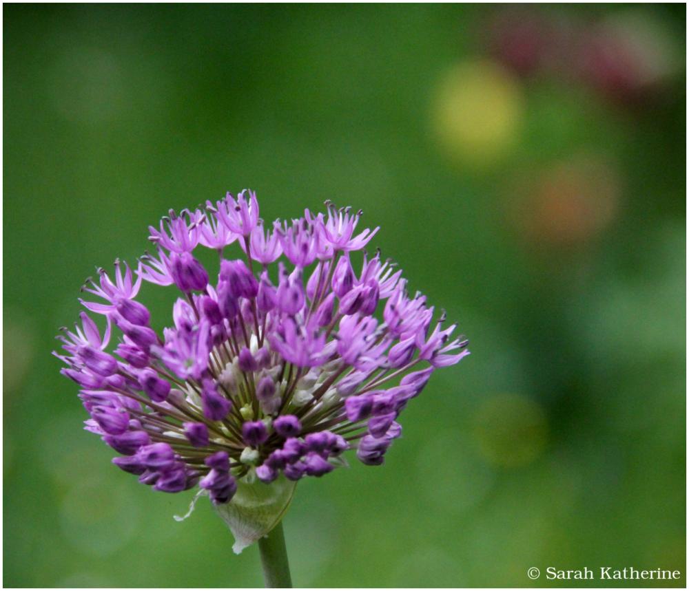 In the Garden of Wildflowers