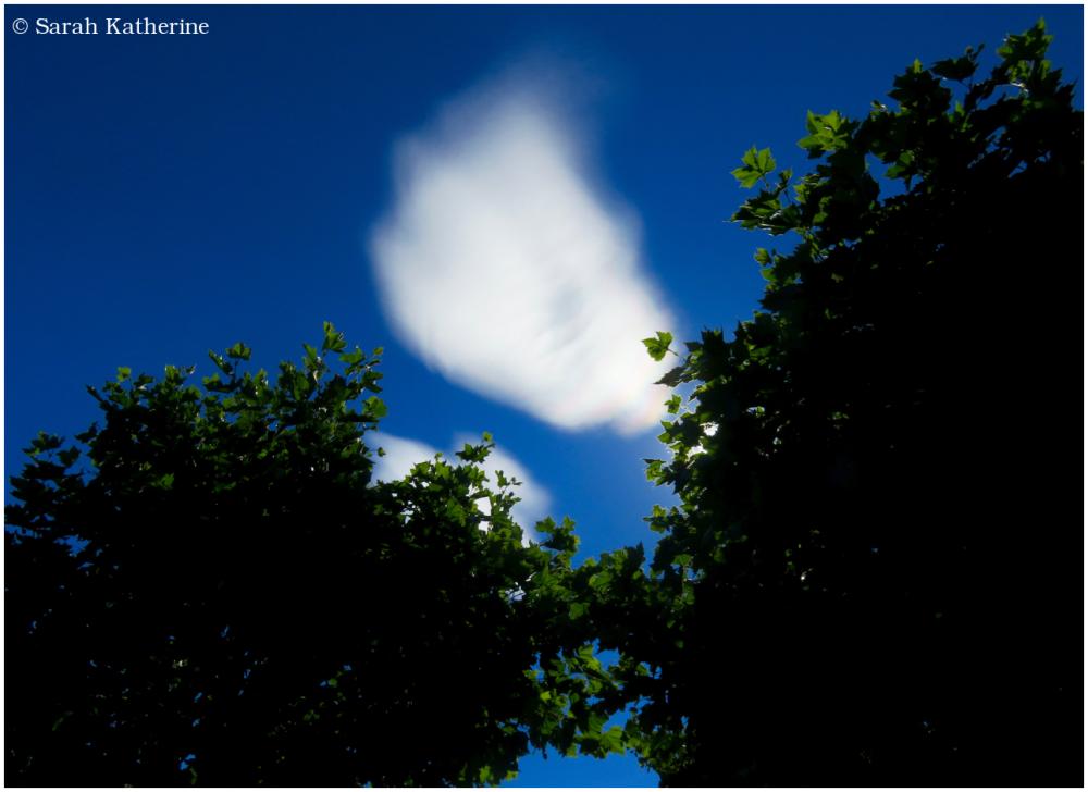 cloud, trees