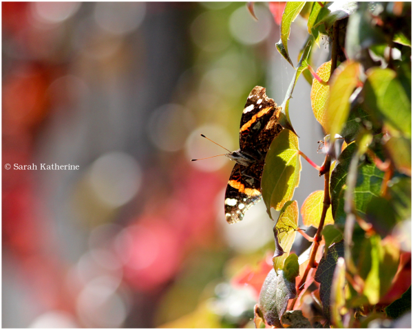 autumn leaves butterfly
