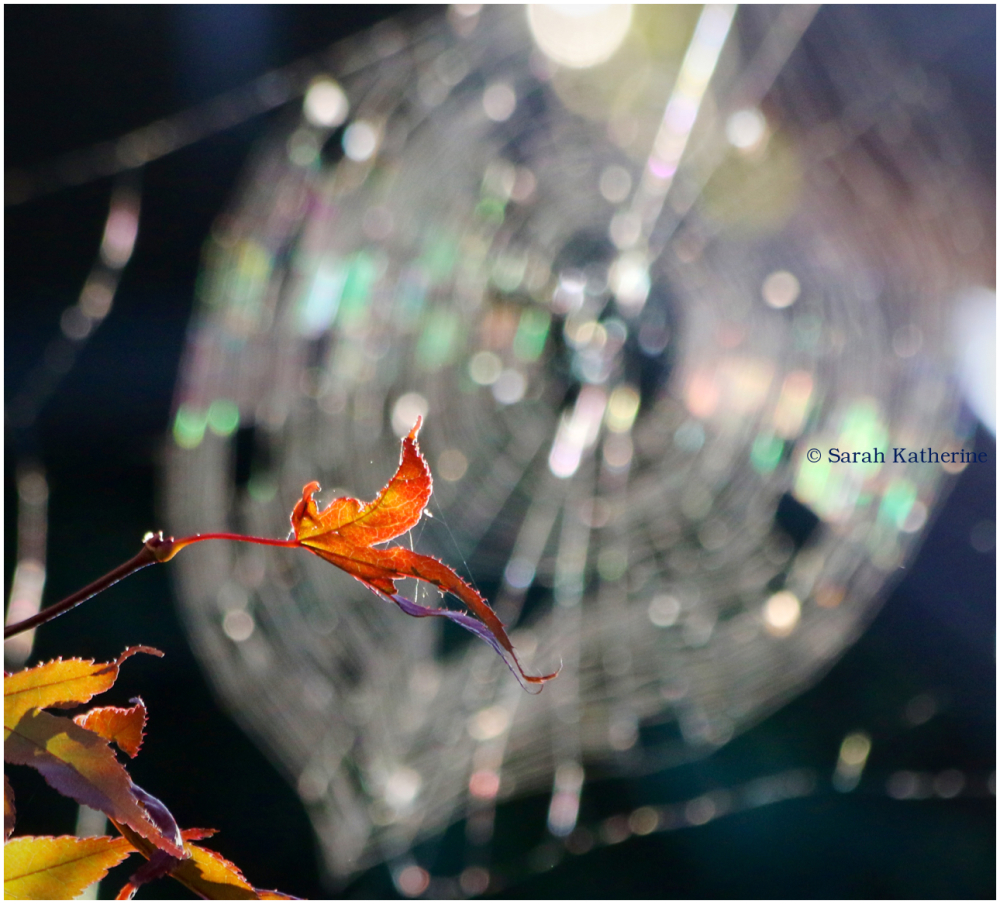 leaf, sunlight, spider web, autumn
