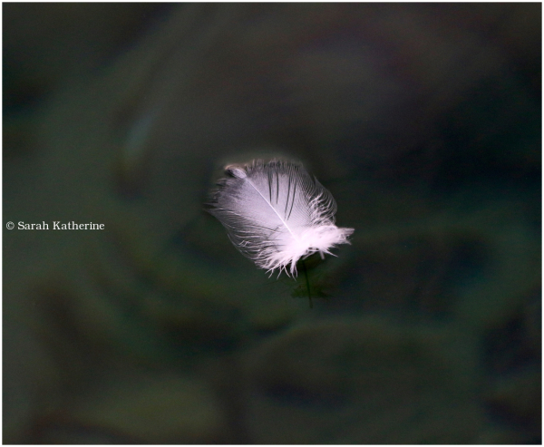 feather, lake