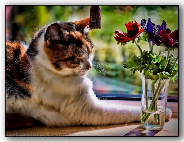 cat window flowers