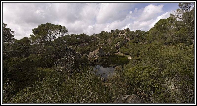 panorámica,bassa,verda,natura,paisaje,menorca
