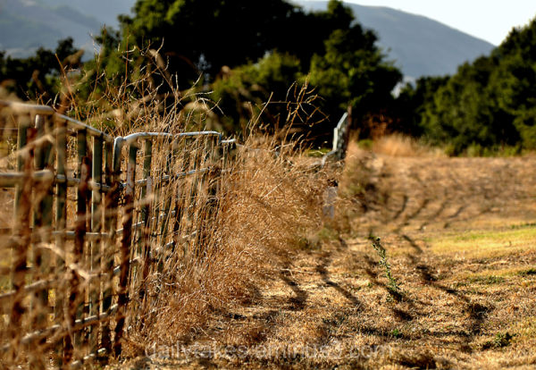 fence lines