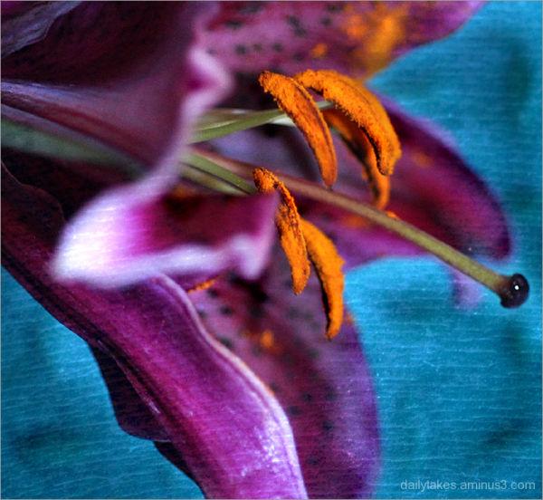 pollen power ....