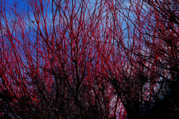 red branches: 2/2
