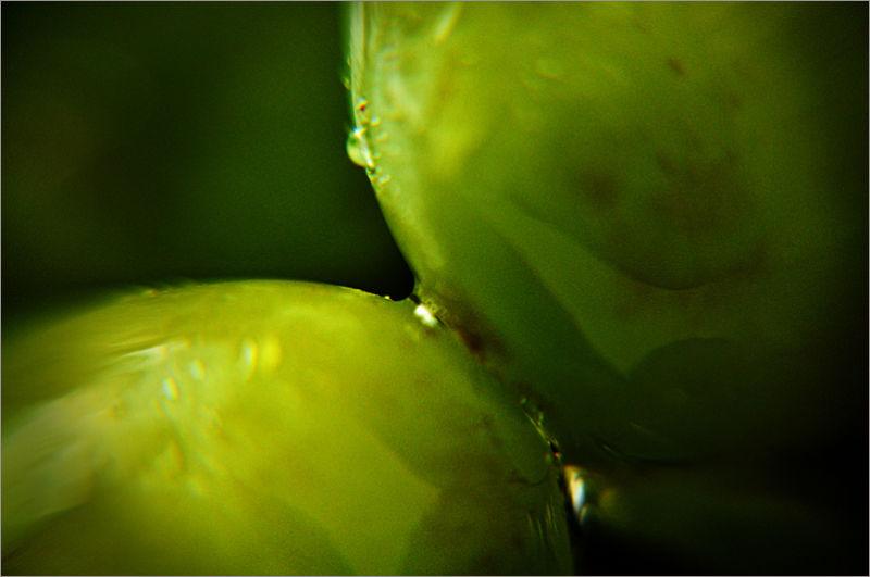 kiss-kiss : ... table grapes