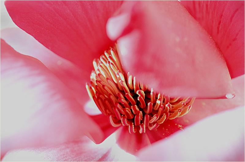magnolia: an inside job