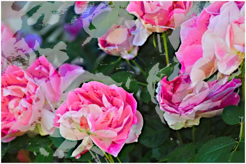 roses: woodblock