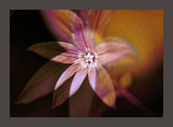 pinwheel ....