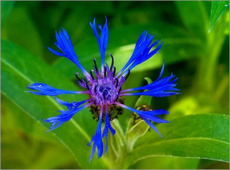 flower purple macro summer