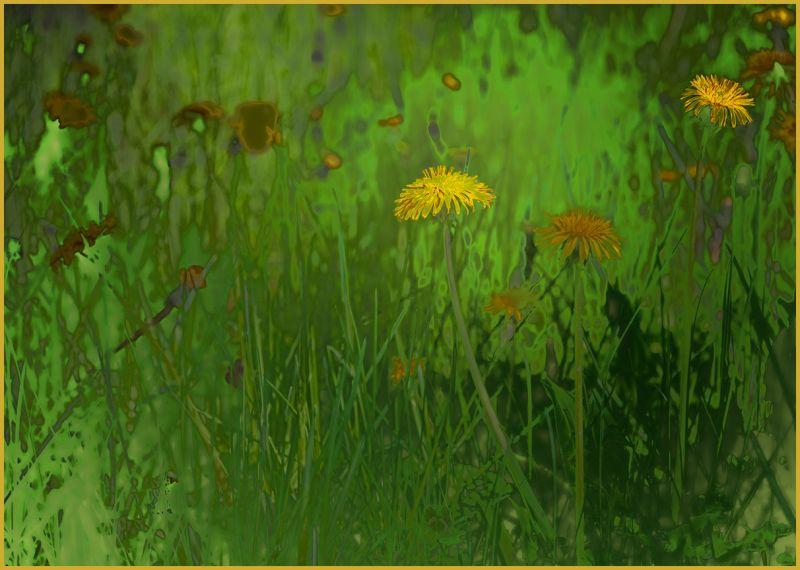 dandelions going wild . . .