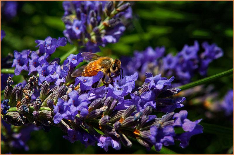bee-careful  . . .