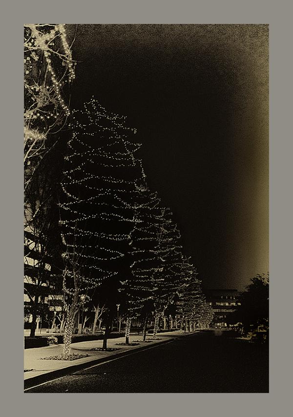 trees lights night christmas decorations monotone