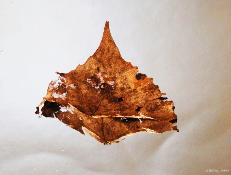 Golden Dead Leaf