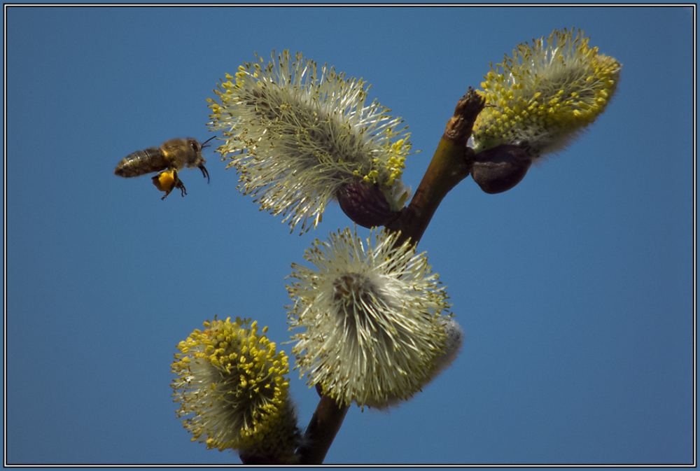 . . . it´s springtime !